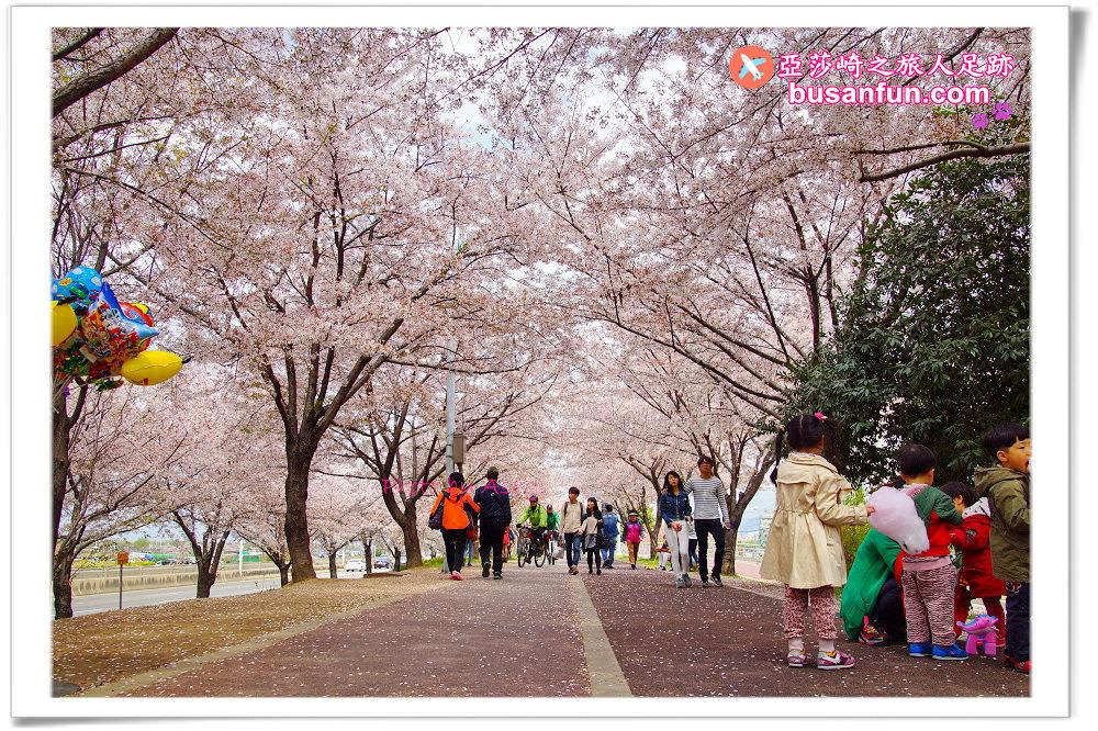 釜山賞櫻景點》沙上站/掛法站|三樂江邊公園五公里櫻花散步道|釜山就該這樣慢慢玩