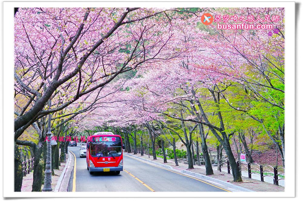 大邱公車票價價格表|搭乘公車簡易通|大邱對內交通幾件事|搭公車實用韓文