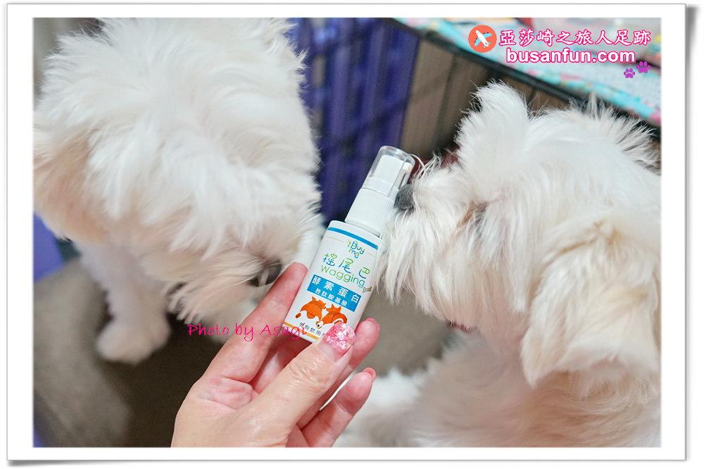搖尾巴酵素蛋白狗狗專用除臭配方|減輕排泄臭味體位口腔異味|亞莎崎家寵物日記體驗文