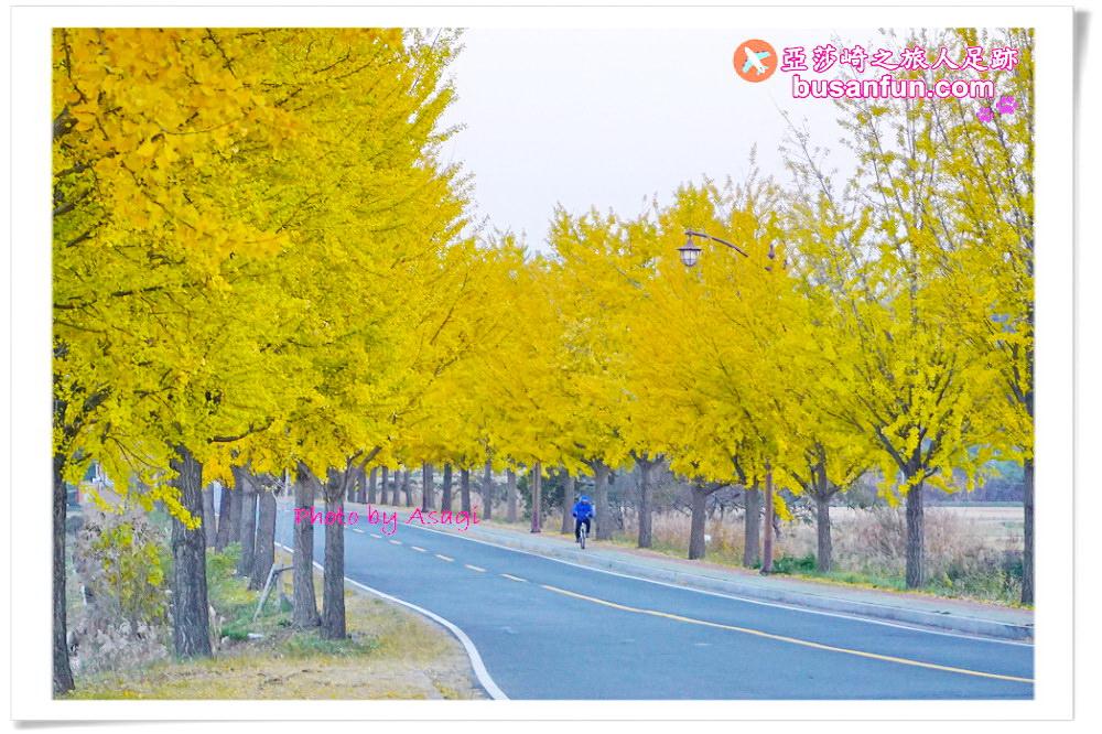 慶州統一殿銀杏大道金黃色秋日景點|交通指引+10號11號公車路線中韓文對照站名|亞莎崎경주足跡