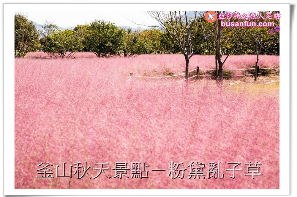 釜山景點秋天粉黛亂子草交通指引、拍攝地點地圖|乙淑島、大渚生態公園、三樂江邊公園