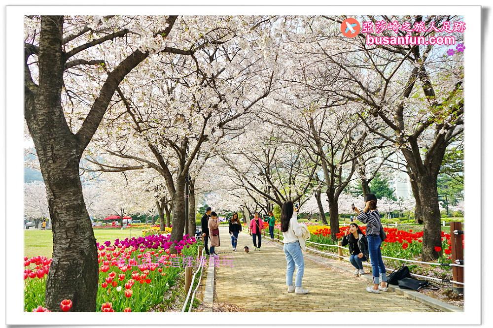 釜山景點|金海蓮池公園春賞櫻花鬱金香夏看荷花
