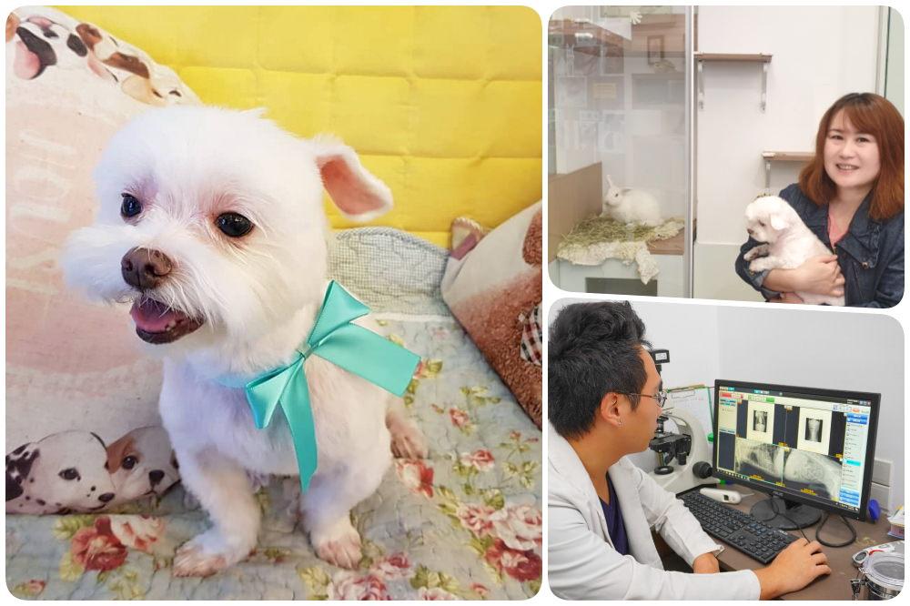寵物狗狗洗牙|哈囉彼得動物醫院馬爾濟斯洗牙記